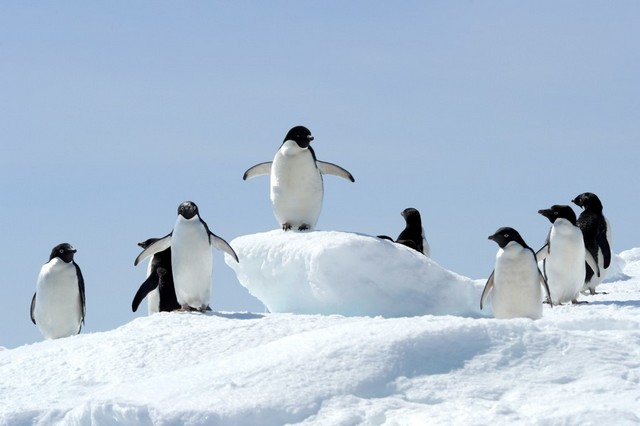 Ponant_Antarctique