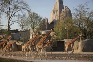 zoo-vincennes