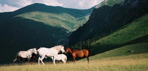 macedoine_2