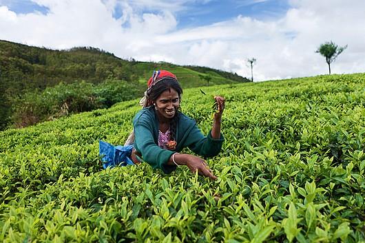 sri lanka population chasse aux tresors 2014 cinnamon