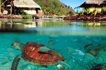 intercontinental-resort-and-spa-moorea