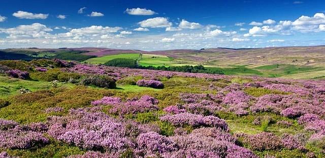 North York Moors-