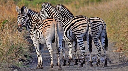 afrique du sud-kwazulu-natal