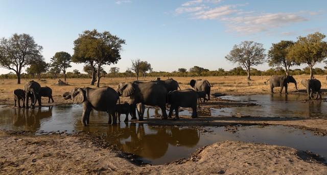 zimbabwe-elephants