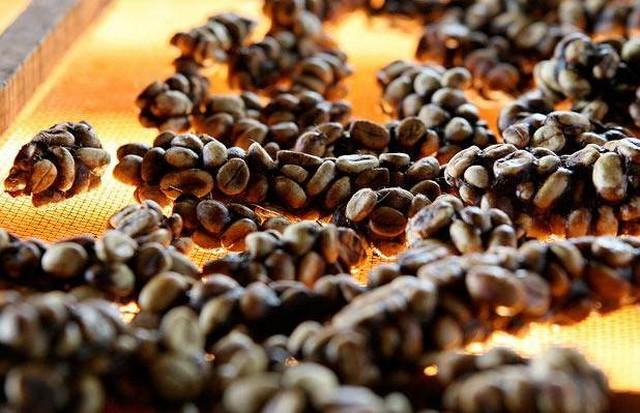 bali-Asia-transasiatique-kopi-luwak-café