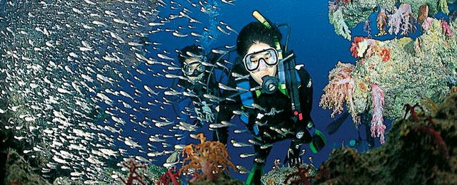 plongee-sous-marine-philippines