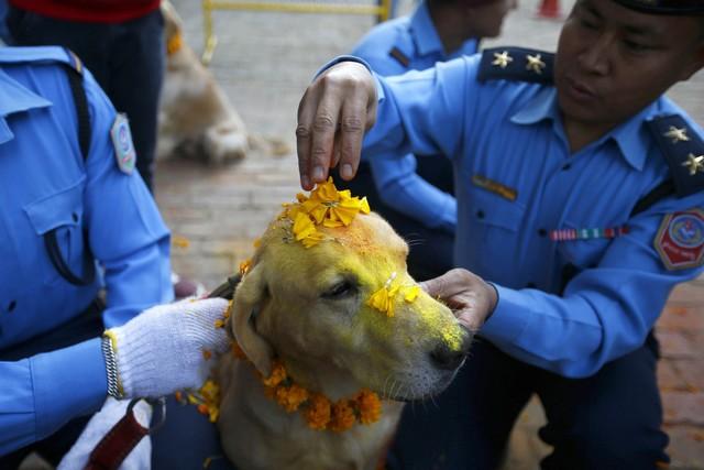 kukur-thiar-chiens-police-nepal