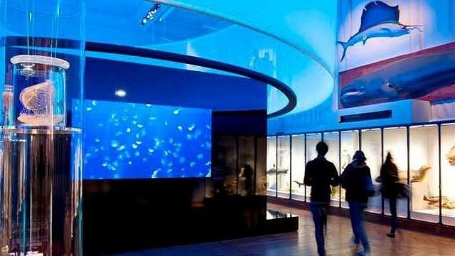 Afbeeldingsresultaat voor musee oceanographique monaco