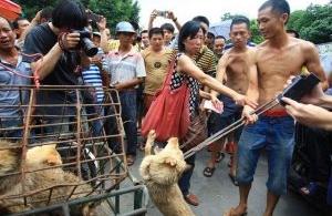 Chine : Le festival de Yulin se régale de viande de chiens !