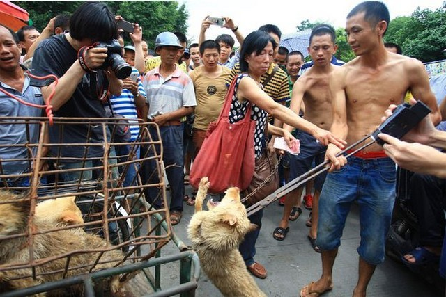 China : The festival of Yulin loves dog meat ! | LaQuotidienne.fr