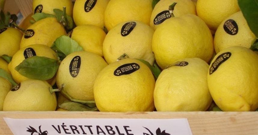Au Pays du Citron » décroche le label Qualité Tourisme