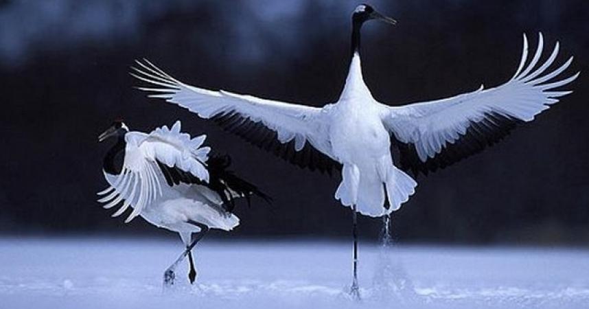 De drôles d'oiseaux à la Haute-Touche